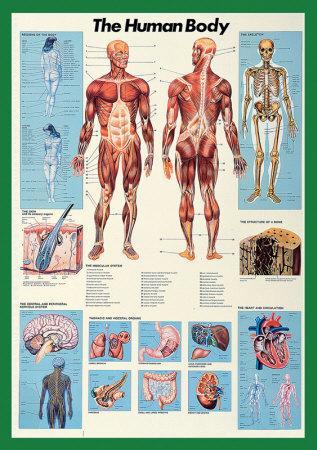 Tělo a orgány